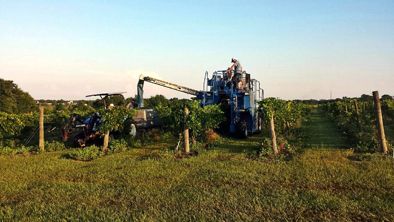 Lovely LakeRidge Winery And Vineyard