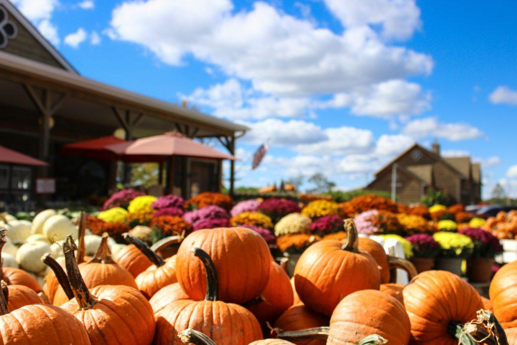 Pumpkins at Hunsader Farms