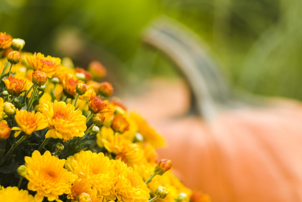 Pumpkins and mums on the porch