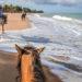 Go Horseback Riding On The Florida Beaches